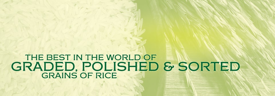 Corporate Rice Specifications Page Banner