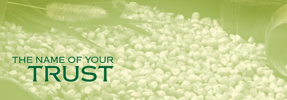 Kausar Maize (Yellow Corn) Page Banner
